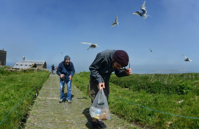 Under siege: Day trippers and photographers cower as the terns circle their victims on the Farne Islands (Picture: NNP)