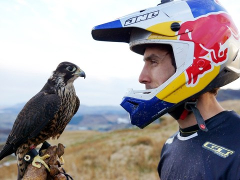 Downhill biker Gee Atherton chased down a mountain by Peregrine falcon