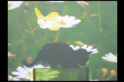Watch cat and fish disappear behind 'Harry Potter invisibility cloak'