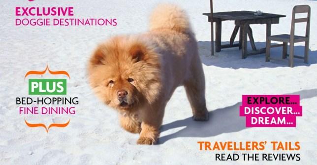 Paw Seasons hotel: Luxury dog holiday on sale for £47,000
