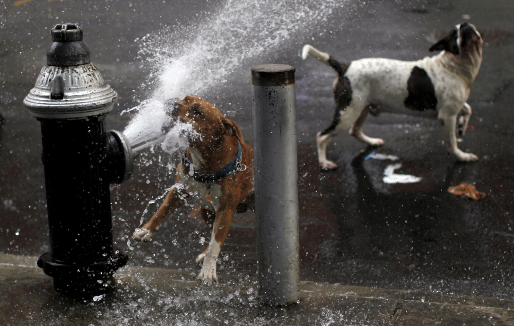 Pet blog: Top tips to cool your pets down