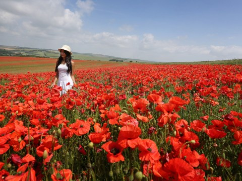 Gallery: Sunshine across the UK 5th July 2013