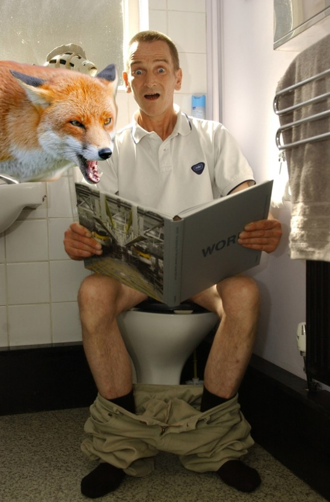 Man attacked by fox while sitting on toilet