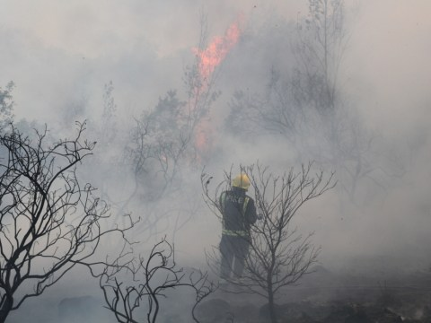 UK heatwave: Epping Forest burns as forecasters warn over rise in wildfires