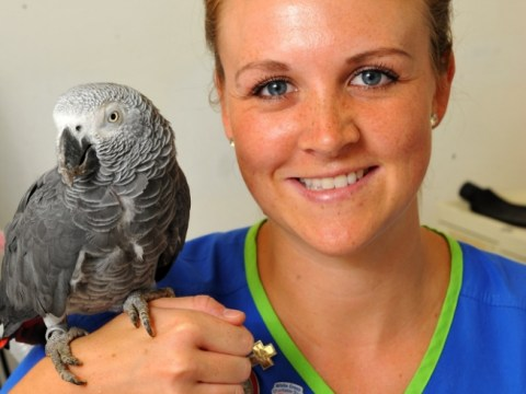Ungrateful parrot tells rescuer to 'b***er off' and yells 'oi' when vet examines it