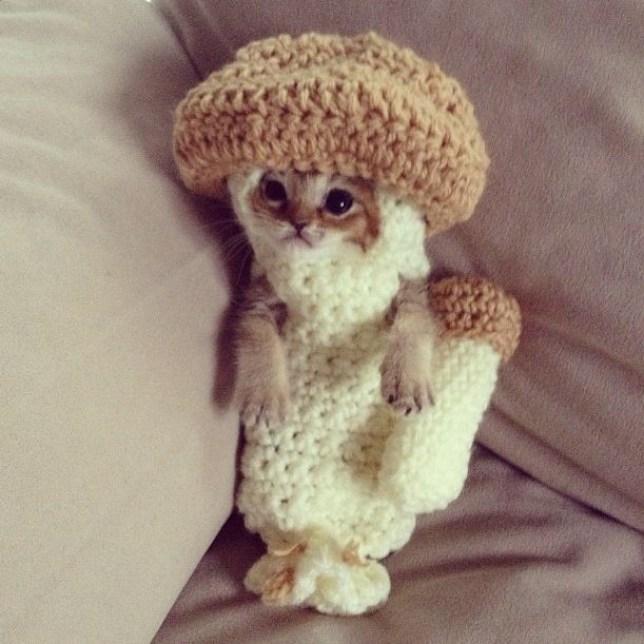 Wasabi-chan: Kitten dons crocheted mushroom costume picture