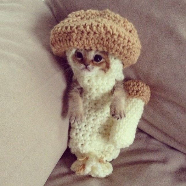 Wasabi-chan: Kitten dons crocheted mushroom costume picture