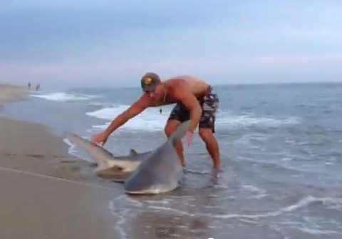 Video: Elliot Sudal wrestles 7ft sand shark to shore with his bare hands in Nantucket