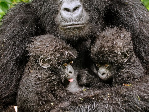 Gallery: Wildlife Photographer of the Year 2013