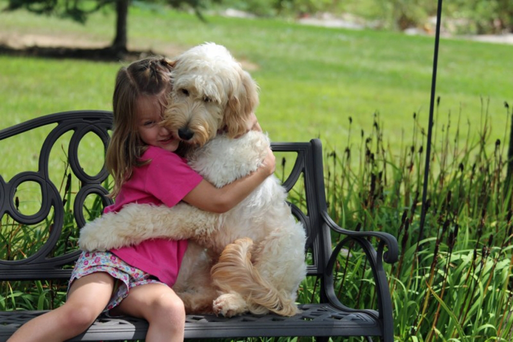 Dogs are better than cats – and here are 12 videos to prove it