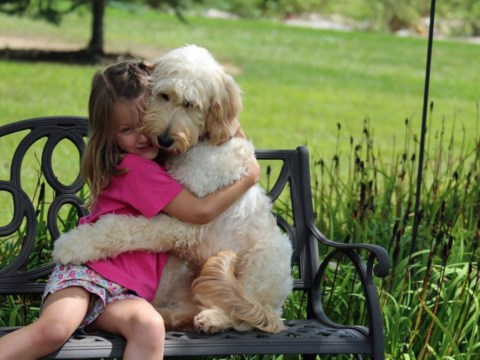 Girl's best friend: LilyBelle the goldendoodle sniffs out nuts in allergic Meghan's food