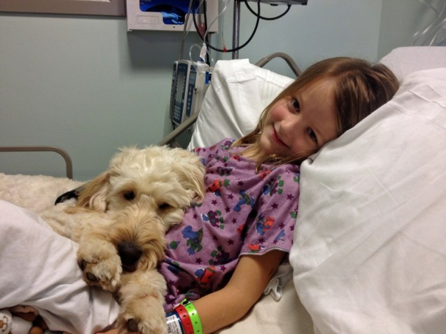PIC FROM CATERS NEWS. Pictured - LilyBelle comforts Meghan during a visit to the hospital - A little girl with a nut allergy has been given a new lease of life thanks to her best friend - a dog that has been trained to sniff out peanuts. Meghan Weingarth, 7, comes out in hives and could go into anaphylactic shock if she eats anything that contains peanuts or almonds. But Meghans faithful companion, LilyBelle has been specially trained to sniff out nuts in her food and keep her out of harms way. The clever canine checks all of Meghans food and raises a paw to warn her if the food shes about to eat contains nuts....SEE CATERS COPY