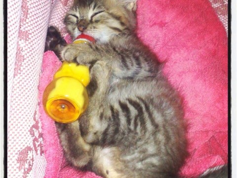 Are these the ten cutest cats on the internet?