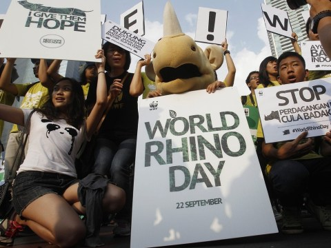 World Rhino Day: Number of rhinos poached reaches record high