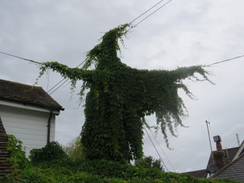 Spooky ivy that looks like witch casts spell on residents of East Sussex town