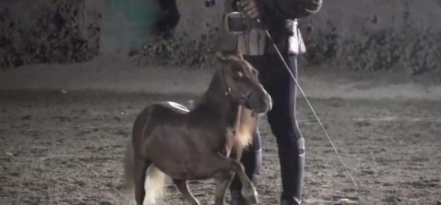Charlie small horse taken by mafia from Bartolo Messina