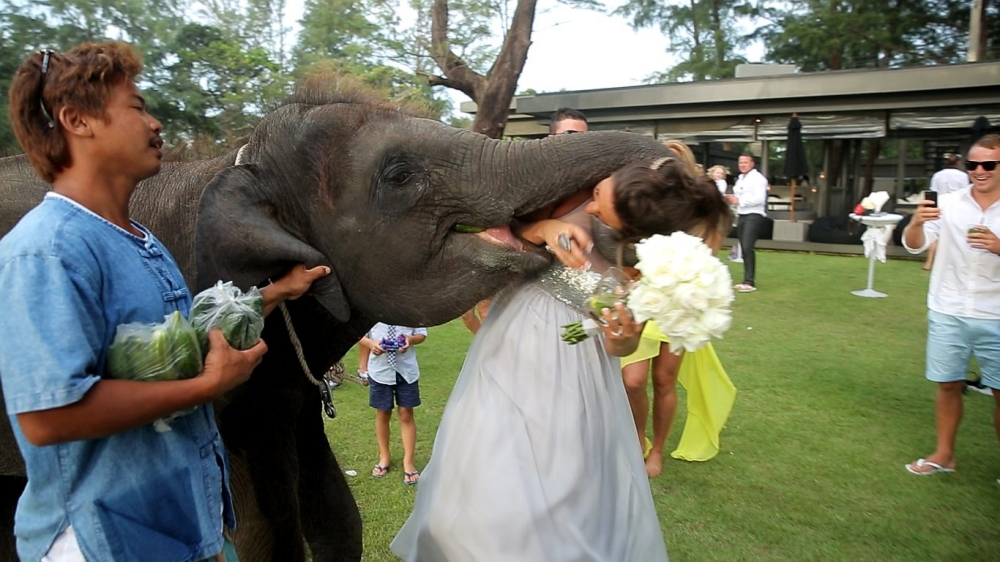 Ew! You may not kiss the bride because you are an elephant and your breath stinks
