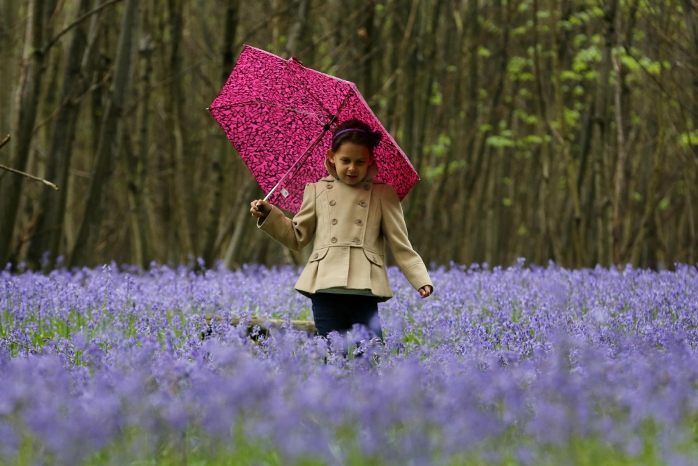 Just one in five children 'connected to nature'