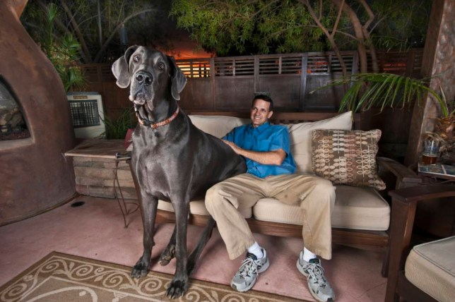 Giant George and owner Dave Nasser