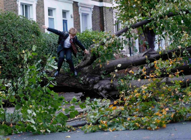 """Theo Harcourt, a 13-year-old student, jumps over a fallen tree as he makes his way to school in Islington, north London October 28, 2013, after strong storm winds and rain battered southern parts of England and Wales early on Monday, forcing flight cancellations, disrupting trains and closing roads and major bridges before the start of rush-hour. Local media dubbed the storm """"St. Jude"""", after the patron saint of lost causes who is traditionally celebrated on October 28. REUTERS/Olivia Harris (BRITAIN - Tags: ENVIRONMENT DISASTER TPX IMAGES OF THE DAY)"""