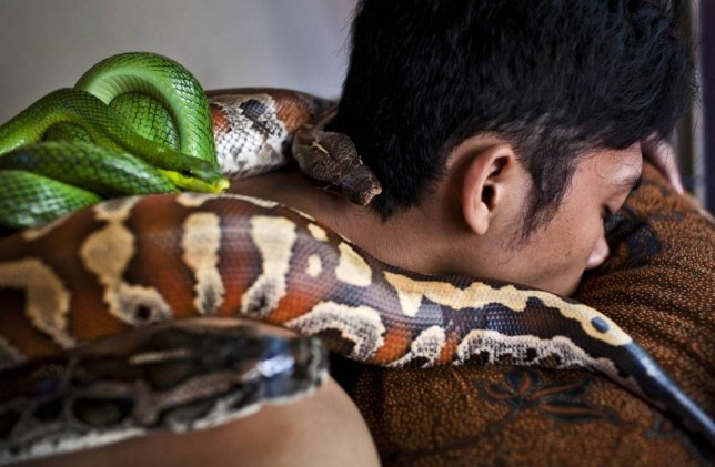 Chill out with a fang-tastic full-body python massage