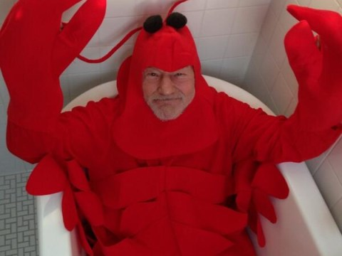 1 picture of Sir Patrick Stewart dressed as a lobster for Halloween