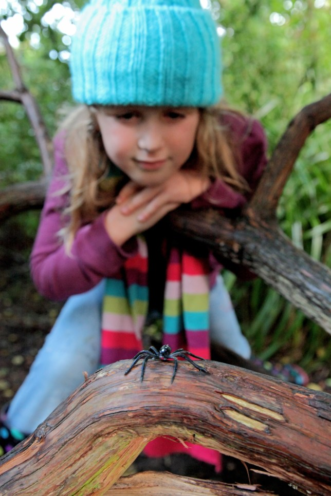 RSPCA: Learn to love the false widow spider this Halloween