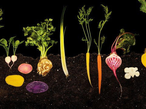 International Food Photography Day: The Photography of Modernist Cuisine – the antidote to bad food photography
