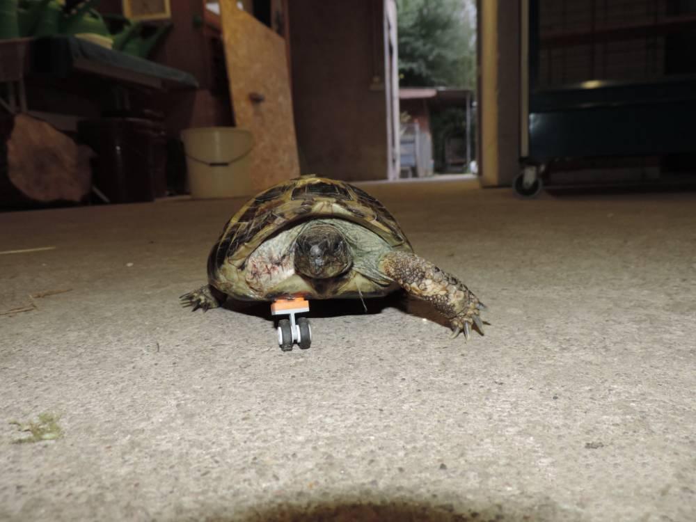 Bionic tortoise, Lego