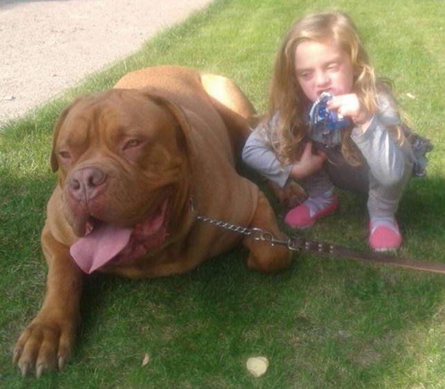** 4 IDS FROM NEIGHBOURS ** ** COPYRIGHT UNKNOWN USE AT OWN RISK ** - PIC FROM CATERS NEWS - (PICTURED: Lexi, locally named as the girl killed, with a French Mastif, believed to be the dog that attacked the child) - A young girl has died after being attacked by her pet dog. The girl, who has not yet been named, was attacked by the animal, understood to be the family pet, at a flat in Loughborough, Leics, shortly after 12.15pm today (TUES). She was rushed to Queens Medical Centre, Notts, but died shortly after. Leicestershire Police say they do not believe that the dog was a breed listed under the Dangerous Dogs Act.