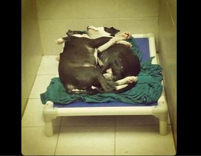 Blind puppy and his brother find new home after cute picture of them cuddling melts hearts