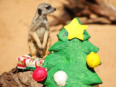 Gallery: Christmas animal magic 2013