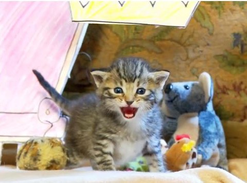 Here's The Lion King as performed by kittens