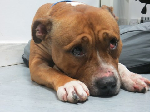 Lonely this Christmas: Adorable dog needs a new home