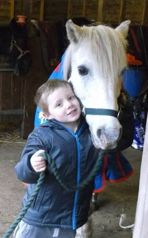 Find Tic Toc: Facebook appeal to reunite Josh Carnegie with taken pony