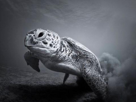 Gallery: ZSL animal photography prize 2014