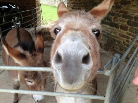 Is donkey milk the elixir of life?