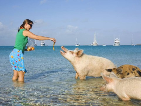 The Exumas: Home to Johnny Depp, Goldfinger, a cocaine kingpin and err… swimming pigs