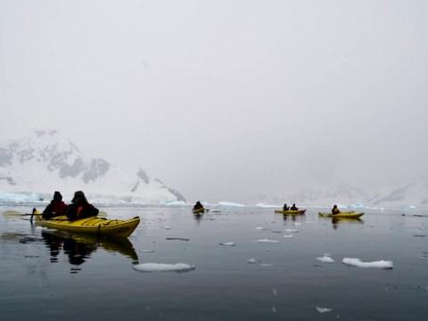 Beware, orcas crossing: We paddle through the Antarctic waters