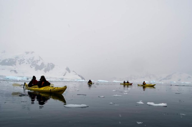 Kayakers cross the eerie Antarctic waters, where killer whales hunt and penguins play (Picture: Lisa Scott)