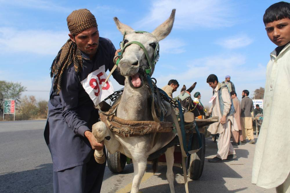 GUJAR KHAN, PAKISTAN - JANUARY 26: Donkey cart race is the traditional sports of Gujar Khan and every year such events held in the area and prizes are distributed among the winners in Rawalpindi, Pakistan, on January 26. In this race two opponents compete along a 4-km straight road and firstly arrived win the prize. (Photo by K. Shahzad/Anadolu Agency/Getty Images)
