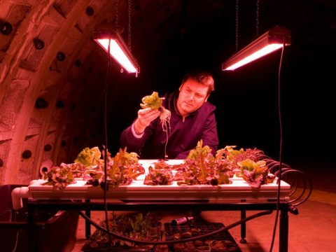 Urban farming: Greens grown in World War II air raid shelter supply Michel Roux Jr's two-Michelin-starred Le Gavroche