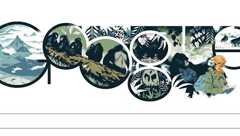 Dian Fossey: Today's Google Doodle in 30 seconds