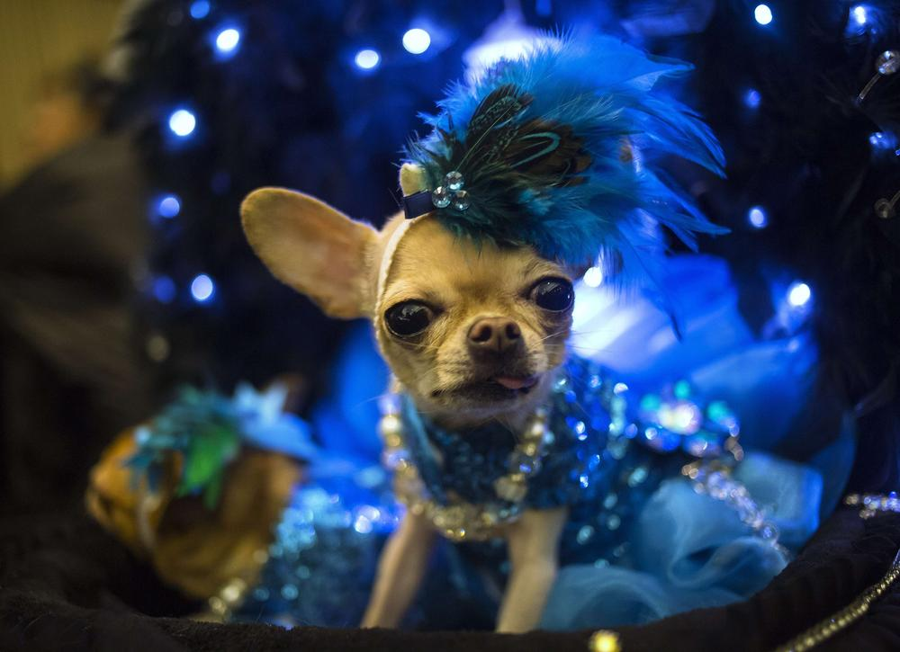 Captivating canines take the New York Pet Fashion Show by storm