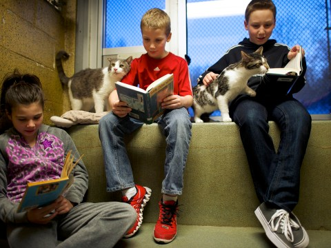 Gallery: Children practise reading to adorable rescued cats