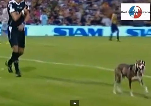 Dog holds up match between Central and River Plate and then poos on the pitch