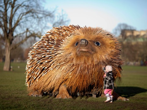 Giant hedgehog suddenly appears in Clapham Common