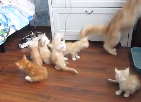 Scaredy cats: Mother cat panics her litter of kittens in jump fail