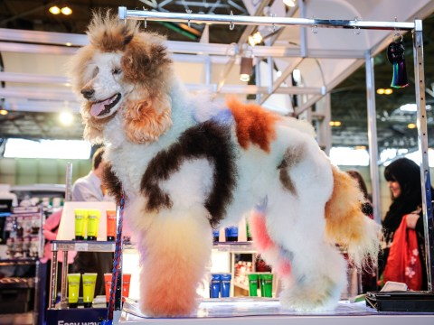 Pictures: The cute and just simply weird dogs of Crufts 2014