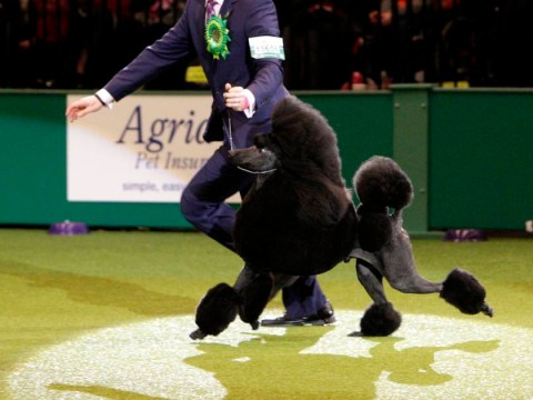 Crufts 2014: Dog called Ricky awarded Best in Show, narrowly beating Dan the Man and Colin